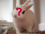 El conejo de la Luna ¿ha muerto?