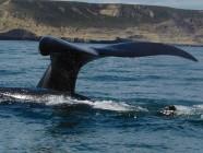 Ballenas vía satélite