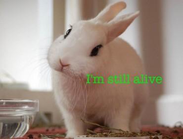 Conejo vivo