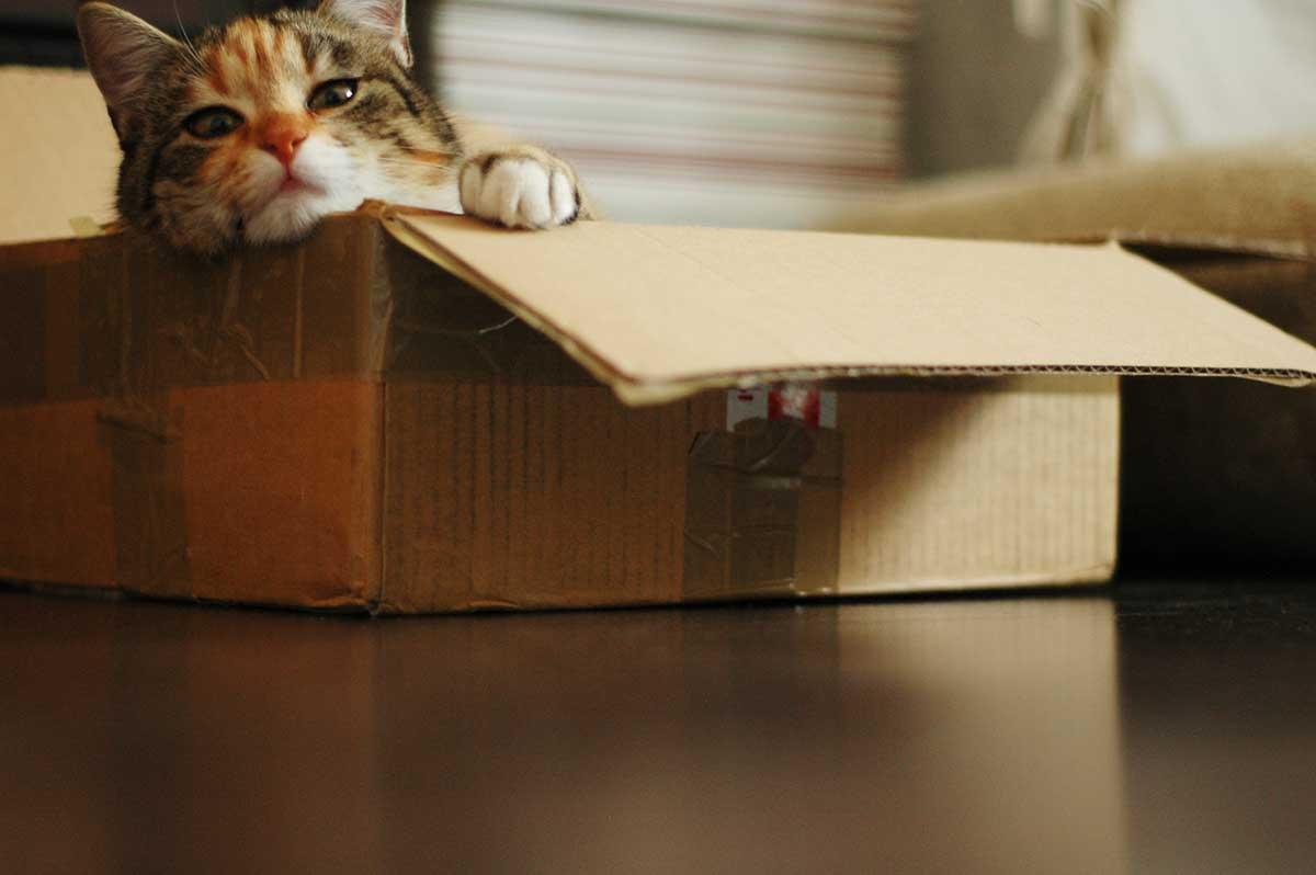 El Gato de Schrödinger: la película
