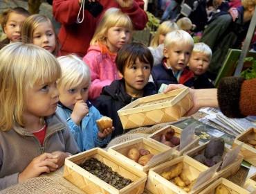 Formación nutricional para niños