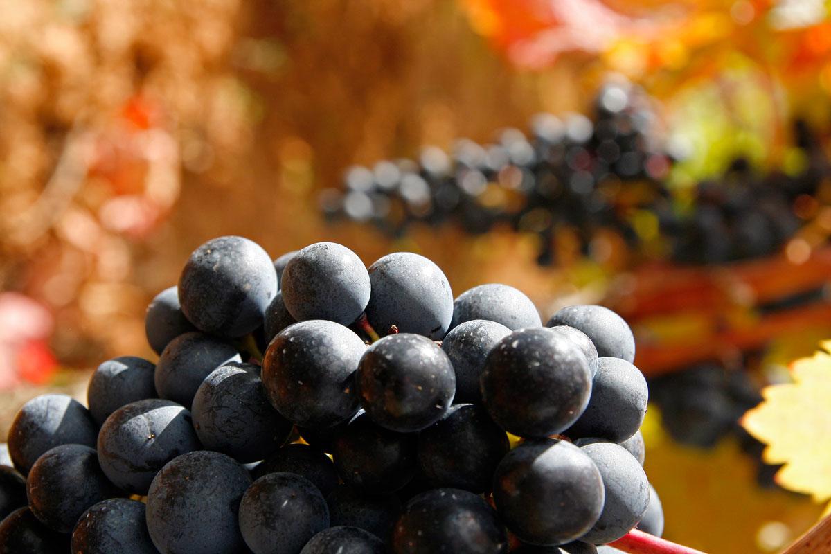 El cambio climático y el vino
