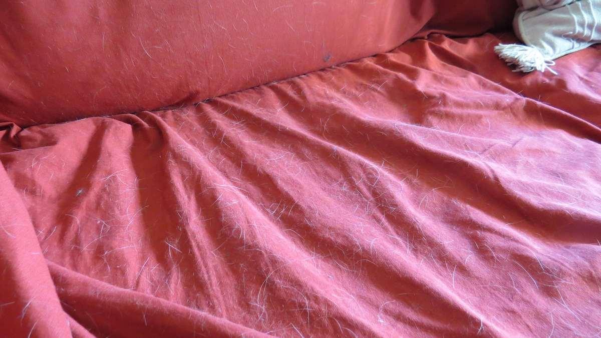 Funda de sofá llena de pelos.