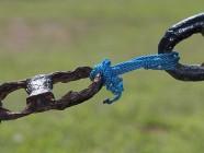 Un nuevo problema de seguridad afecta a OpenSSL