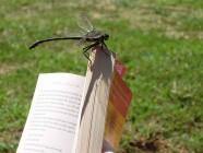 Libros para leer y (re)leer en verano