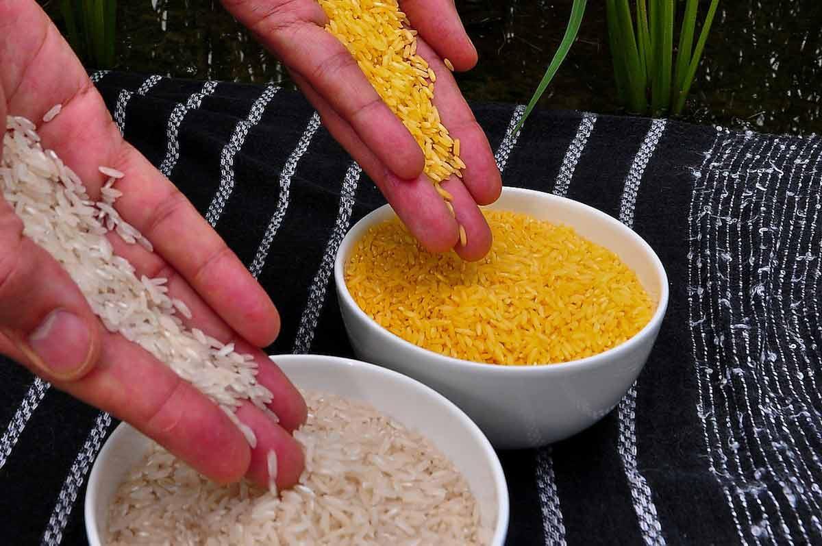 arroz dorado