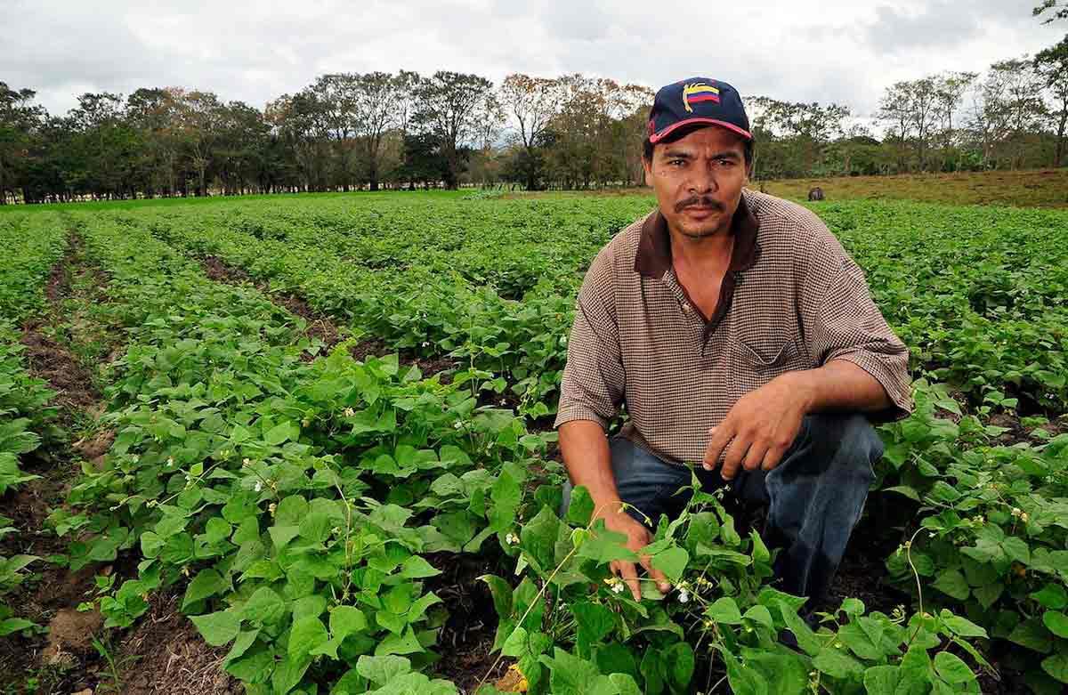 PlantVillage: la web abierta al conocimiento global sobre cultivos alimenticios