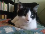 Así se volvió dócil (más o menos) el gato doméstico