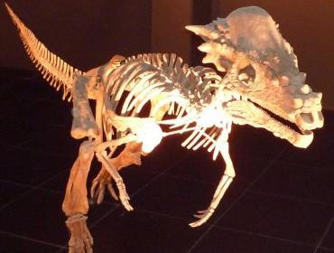 Dinosaurio esqueleto