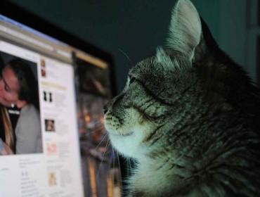 Gato mirando facebook