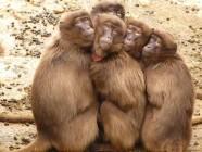 ¡Vaya! Los monos saben contar y a ti tuvieron que enseñarte