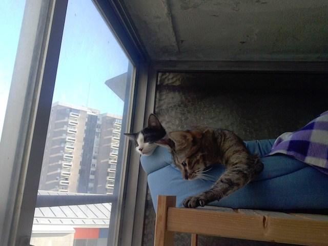 Eme y Mac en la ventana