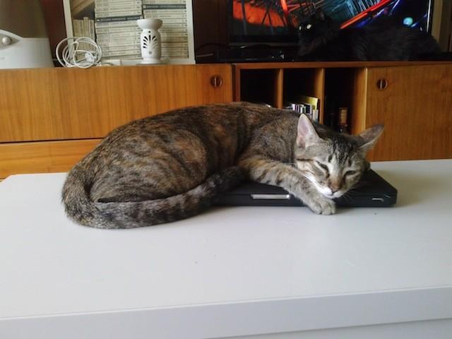 Eme en el ordenador