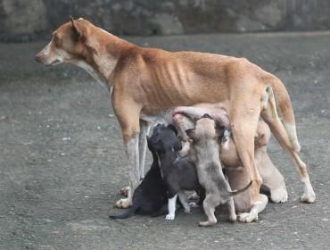 perra amamantando cachorros