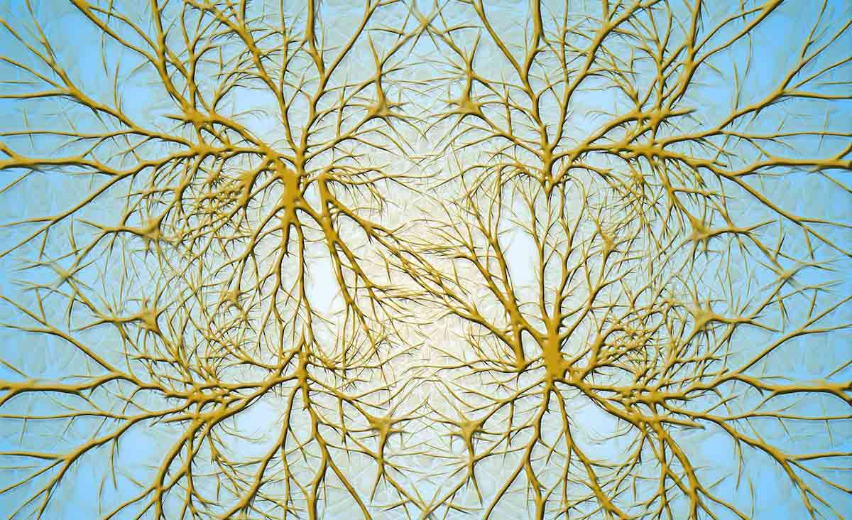 Así funciona el cerebro humano según la física