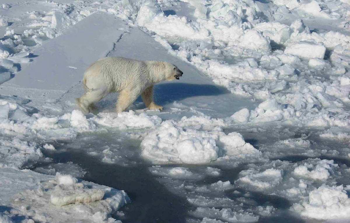 Esta es la insólita razón por la que el Ártico está tan envenenado con metilmercurio