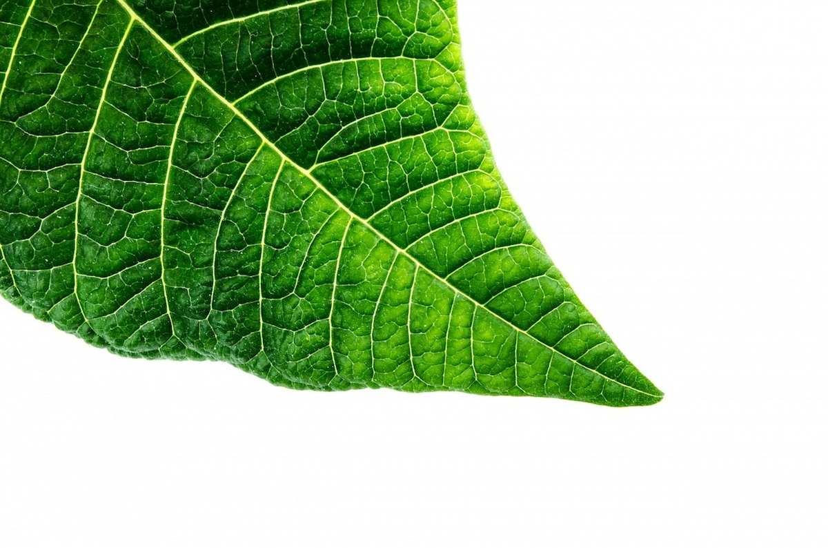 Cómo imitar la fotosíntesis para convertir el CO2 en químicos útiles para la industria