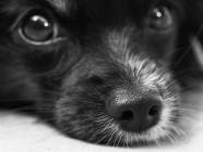 Japón y las residencias para cuidar perros ancianos