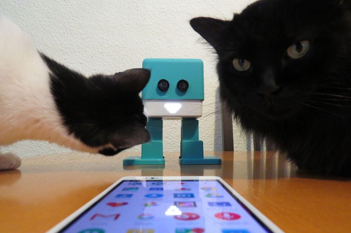 Un mes con Zowi, el robot de BQ para ni帽os