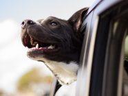 Un refugio de animales aumenta las adopciones de perros gracias a Pokemon Go