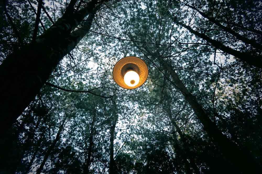 Cómo obtener electricidad imitando a los árboles
