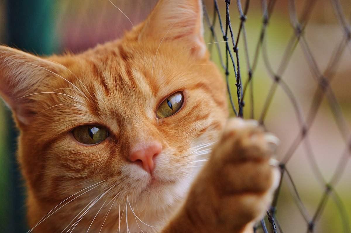 Un estudio confirma que los dueños de gatos no están mal de la cabeza