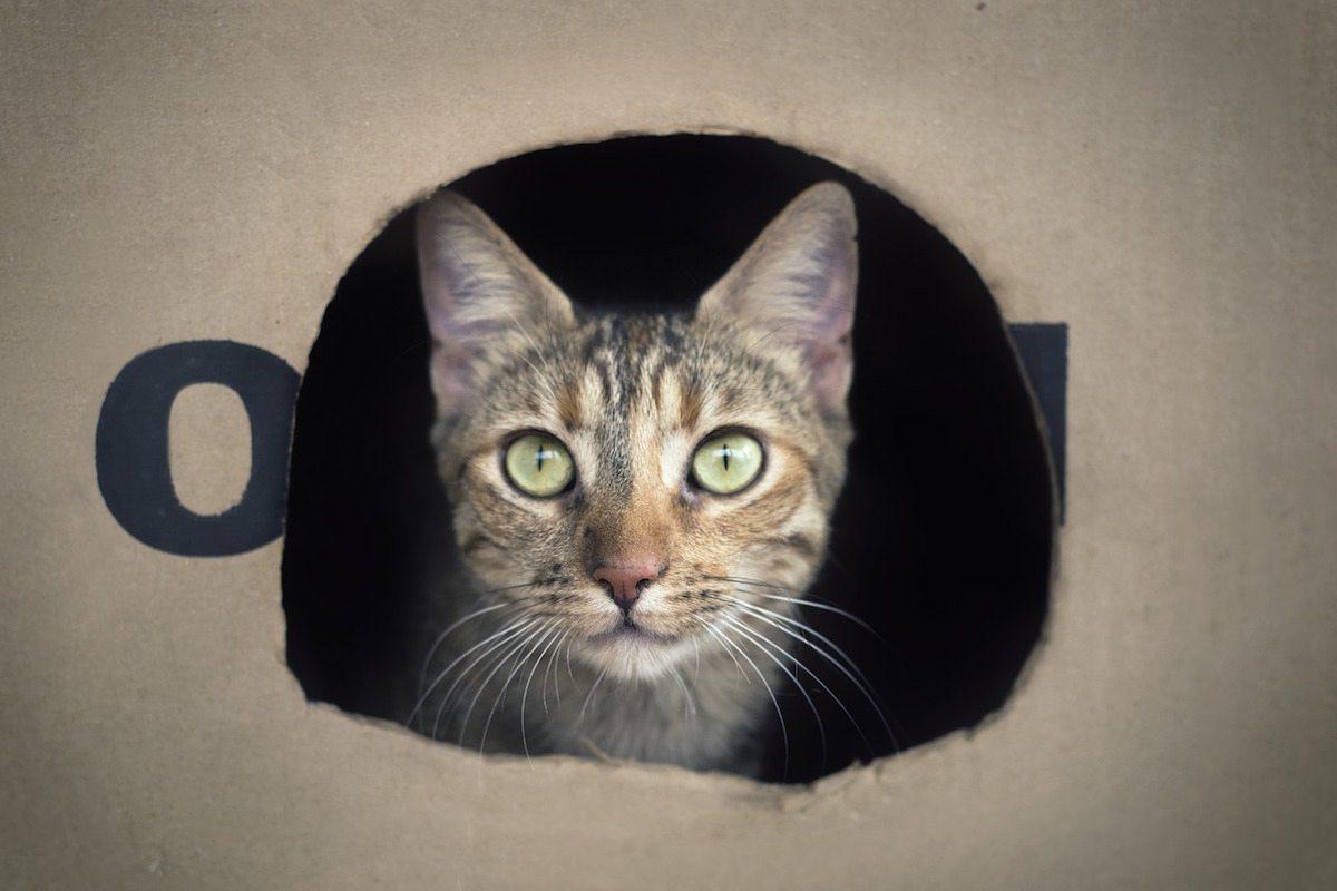 gato-caja-schrodienger