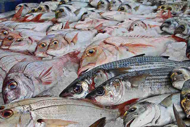 peces-mercurio