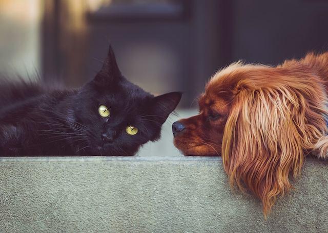 perro-gato