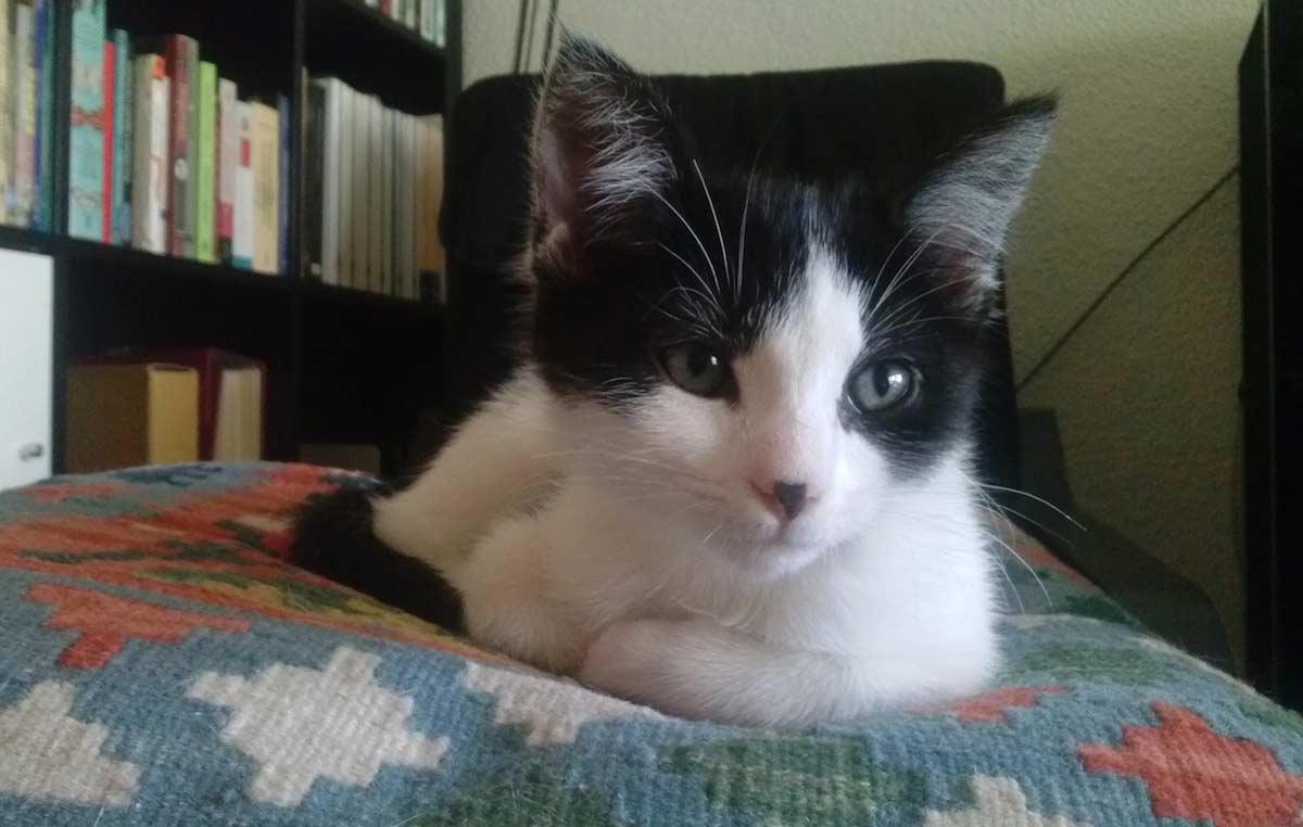 Gato Mac